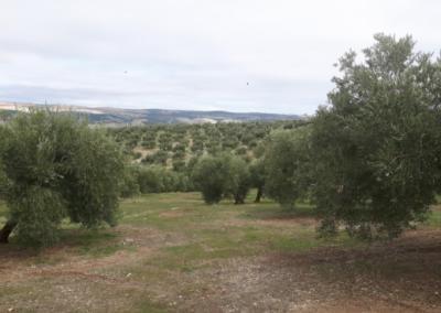 Estudio de Impacto Ambiental para tramitar una Autorización Ambiental Unificada. Perforación para abastecimiento de agua en Piñar (Granada)